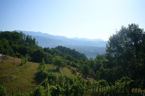 foto In posizione dominante sulla vallata, alla sommità di una piccola collina, casa colonica e piccolo podere con campi e vigna.